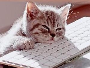 Gatto stanco